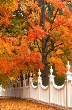 A pretty white fence surrounded by colorful Fall foliage in Bennington, Vermont. Bennington Vermont, Beautiful Places, Beautiful Pictures, Stunningly Beautiful, Autumn Scenes, White Fence, Green Fence, Fence Landscaping, Seasons Of The Year