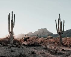 Cactus in the desert in front of mountains // western road trip adventure photography The Places Youll Go, Places To Go, Thelma Et Louise, Beautiful World, Beautiful Places, Desert Aesthetic, Loona Kim Lip, Desert Dream, Desert Art