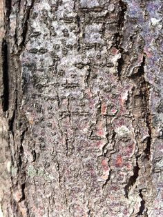 In the right light, even tree bark can be #luminous. #DetailsDetails