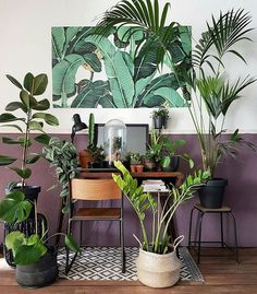 Plant inspiration + bohemian style home decor + greens + bright and boho inspired interior