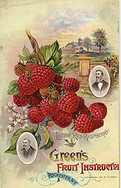 Green's Fruit Instruction - Seed Catalogs from Smithsonian Institution Libraries Vintage Labels, Vintage Ephemera, Vintage Cards, Vintage Postcards, Propaganda E Marketing, Images Noêl Vintages, Seed Art, Etiquette Vintage, Vintage Seed Packets