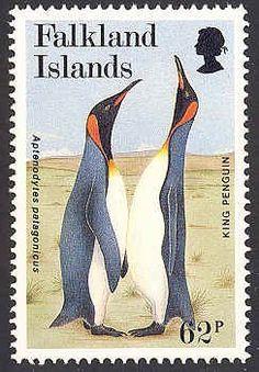 Islas Falkland 2016 - El Pingüino Rey es el segundo pingüino más grande después del Pingüino Emperador.