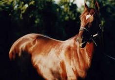 Thunder Gulch(1992)(Colt)Gulch- Line Of Thunder By Storm Bird. 4x5 To Native Dancer. 16 Starts 9 Wins 2 Seconds 2 Thirds. $2,915,086. Won Ky Derby(G1), Belmont S(G1), Florida Derby(G1), Travers S(G1), Ky Cup Classic (L), Remsen S(G2), Swaps S(G2), Fountain Of Youth(G2), 2nd Hollywood Futurity(G1), Cowdin S(G2), 3rd Preakness(G1). 1995 U.S. Champion 3 YO Colt. Leading Sire In 2001 In North America.: