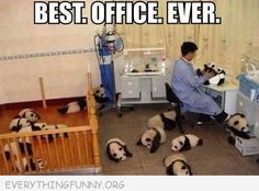 Apparently what I need in order to love going to work is 15 baby panda bears.