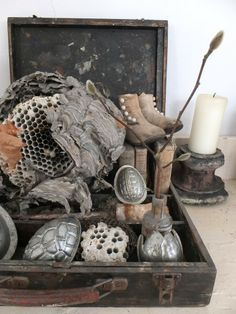 *I love collecting things I find along a path...Wonderfully displayed here in this box by someone....