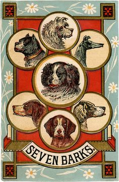 Vintage Dogs Trade Card from blog--Today I'm sharing this fantastic Vintage Dogs Trade Card! This might be my new favorite image!! Shown above is an old Advertising Card featuring 7 adorable Dogs! The card was made to advertise Seven Barks… although I have no idea what that was! I love the red and blue color combo on this one and the layout of the card is awesome! A fun one to use in your Furry Friend themed projects!! - See more at: