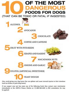 10 of the Most Toxic Foods for Dogs http://theilovedogssite.com/10-of-the-most-toxic-foods-for-dogs-please-share