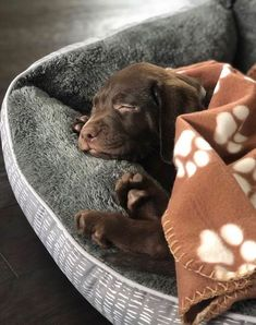 PlayBarkRun - Becoming Better For Your Dog Adorable La. - PlayBarkRun – Becoming Better For Your Dog Adorable Lab Puppy - Labrador Retrievers, Labrador Dogs, Retriever Puppies, Chocolate Labrador Retriever, Dogs Pitbull, Cute Dogs And Puppies, Baby Dogs, Doggies, Fluffy Puppies