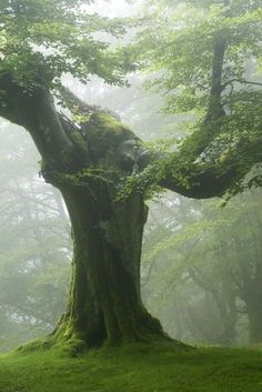 wethinkwedream:  monjodulis:  Green Tree  what a beaut