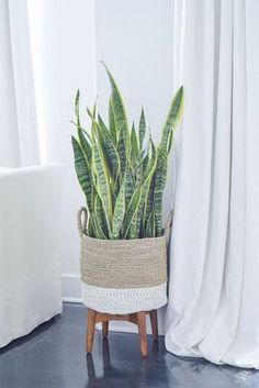Summer Home Tour Tips for Simple Summer Living - House Plants - ideas of House Plants - snake plant mother in laws tounge in basket modern design mid centry modern plant Hanging Plants, Indoor Plants, Patio Plants, Diy Hanging, Chlorophytum, Modern Plant Stand, Plant Basket, Basket Planters, Decoration Plante