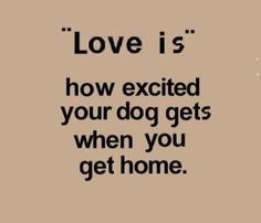 love dogs by pretty avery