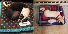 PrideBites Bed— Here Are The Most Awesome Dog Gifts You Haven't Seen Yet