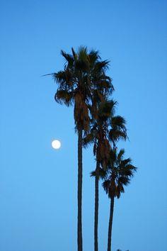 Palm tree palm tree palm tree