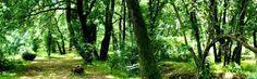 Il bosco - Tenuta Valle Cento www.tenutavallecento.com