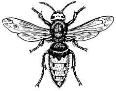 wasp tattoo - Google Search