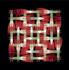 a blossom kaleidoscope Chandelier, Ceiling Lights, Home Decor, Homemade Home Decor, Candelabra, Ceiling Light Fixtures, Ceiling Lamp, Outdoor Ceiling Lights, Decoration Home