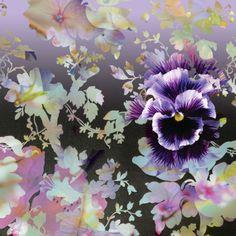 Lara Skinner - LD982_Floral Abstract Pansy