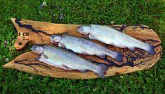 wedzenie ryb, pstrag wedzony, karp wedzony Karp, Fish, Pisces
