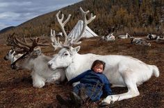Caribou and child