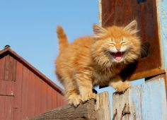 """Looks who's laughing now~!~  (*""""stop laughing!...i'm afraid of heights!!!"""")"""