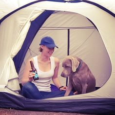 Sat 20 Feb; romantic weekends away with my SO  #weimaraner #roadtrip #camping #instadog #greatoceanroad #apollobay by gems_k http://ift.tt/1LQi8GE
