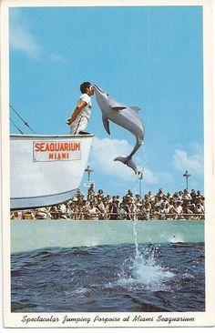 jumping porpoise, Seaquarium, Miami