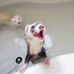 Some ferrets do  like water. Ferrets shouldn't be bathed with soap though.. unless very dirty. They clean themselves like cats do. If you must bathe them use a baby shampoo or one specifically for ferrets. The more you bathe a ferret the more oil its skin produces causing a stronger smell. A healthy ferret whose bedding is cleaned regularly doesn't smell.