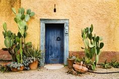 Photographic Print: Old Doorway Surrounded by Cactus Plants and Stucco Wall. by BCFC : art garden indoor plants Cacti And Succulents, Cactus Plants, Indoor Cactus, Cactus Art, Pool Plants, Mexico Cactus, Restaurant Patio, Stucco Walls, Porche