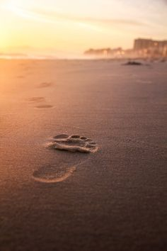 Explore this hand-curated collection of beach day stock photos. Perfect images to tell your brand's story. Perfect Image, Beach Day, Stock Photos, Explore, Water, Outdoor, Collection, Gripe Water, Outdoors