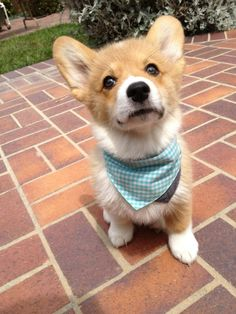 nice scarf