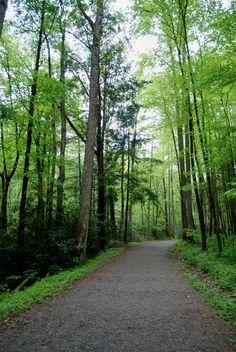 Porters Creek Trail ~ Great Smoky Mountain National Park