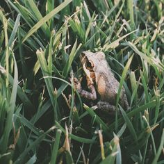 I saw a frog today.