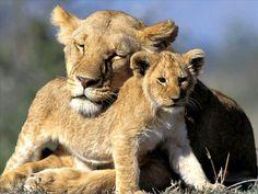 amor de mãe é eterno