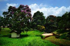 Sri Lanka landscape - Google Search