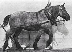 (1880s) Workhorse Walking