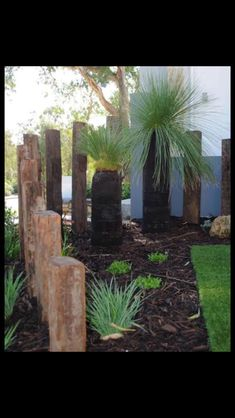 Grass trees and vertical railway sleepers, nice contemporary setting. Tropical Landscaping, Tropical Garden, Front Yard Landscaping, Australian Garden Design, Australian Native Garden, Back Gardens, Outdoor Gardens, Garden Landscape Design, Bamboo Landscape