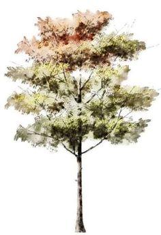 Resultado de imagen para tree watercolor