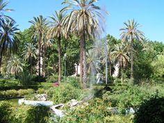 Palms in the Park at Villa Bonanno, Palermo, Sicily, Italy