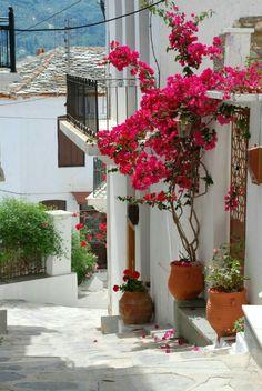 beautiful balconies in spain balcony with flowers in greece 35 Worlds Most Beautiful Balconies is part of Beautiful gardens - Most Beautiful Gardens, Beautiful Flowers, Beautiful Places, Small Balcony Design, Balcony Garden, Garden Gates, Garden Inspiration, Container Gardening, Vegetable Gardening