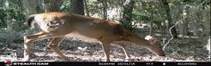 Fort Clinch State Park Trail Cam videos