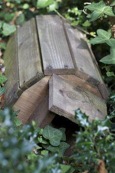Hedgehog highways – Turning your garden into a hedgehog haven