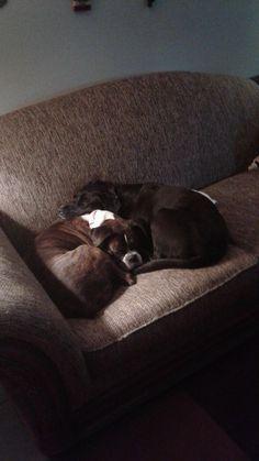 http://ift.tt/2qqWxg2 and Ciri love to cuddle.