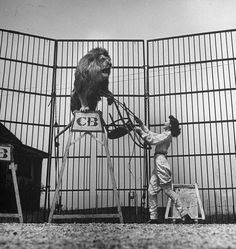 Then 17-year-old lady lion trainer Pat English training a lion to behave inside a cage. Photo via LIFE Images Hosted by Google.