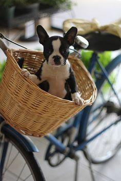 As if I could get any cuter... stick me in a bike basket.