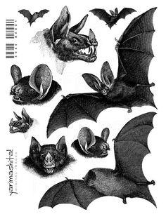 Vintage Halloween Images Printable   Bat vintage images Halloween Black and White Goth Digital collage ...