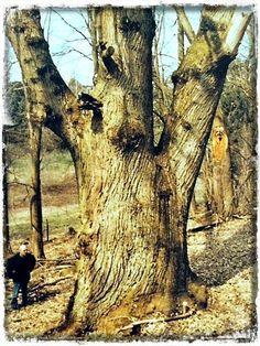 Woody's : Ξύλο: Βασικές γνώσεις,πληροφορίες και είδη ξυλείας...