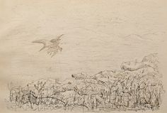 "Birds in Flight in an Upland Landscape by Charles Murray Adamson (1820-1894) Pen and ink drawing on paper In a cream conservation grade mount (matt) ​In good condition, as illustrated ​Drawing: 17.7 x 25.8 cm (visible); mount: 28 x 35.5 cm (11"" x 14"")"