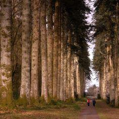 Woodstock Gardens @Kilkenny, Irelnd.