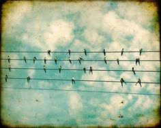 Birds on a wire feathers bird photo black and white swallows summer blue sky cream clouds tweet Flock 8x10. $30.00, via Etsy.