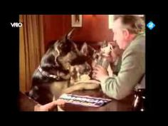 German Shepherds in an English Pub The accent is a bit offensive, but the dogs and soda water are very cute!